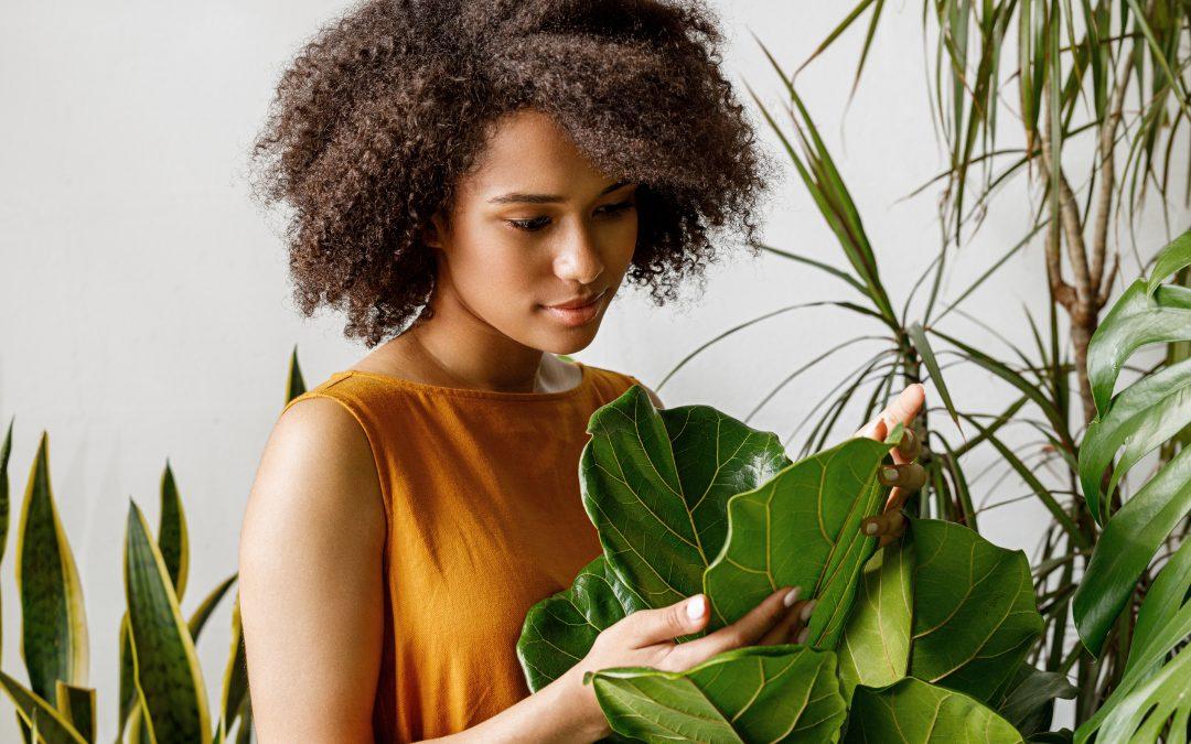 Quelle plante choisir et quels bienfaits
